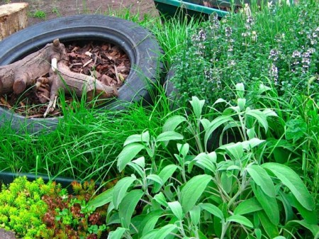 Growing herbs in a tyre