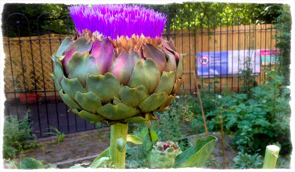 A regal artichoke