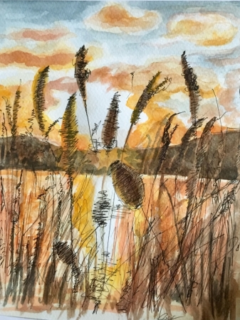 Woodberry Reeds at Sunset (watercolour 2018)